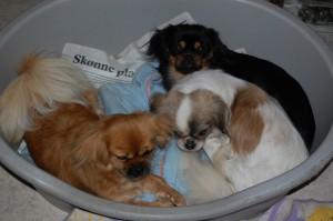 Ruby, Bonnie og Ceba