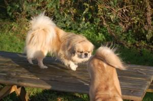 En og halv hund