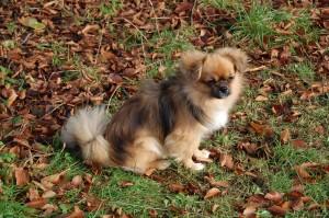 Søde lille Tosca