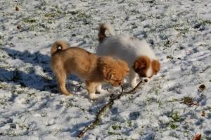 Der var en gren under sneen