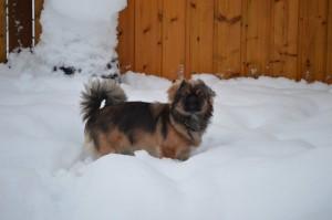 Flot hund i sneen