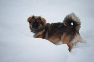 Han kan vist godt lide sneen