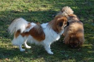 Xenta og Heidi