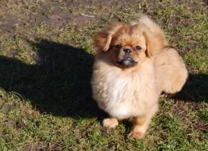 Min lille hundebamse