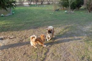 Både Tosca og Yoda elsker min store have