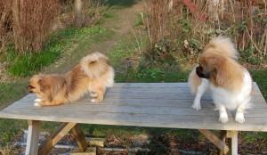 Tosca inviterer til leg men Olympia gider ikke