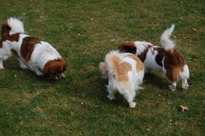 Ley-La, Milla og Ayla