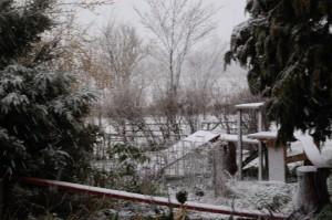 Et kig ud på hundenes legeplads, i dag uden en eneste hund og helt uderørt sne
