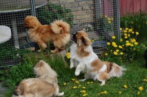 Andie, Heidi og Vani får øje på Kosmos