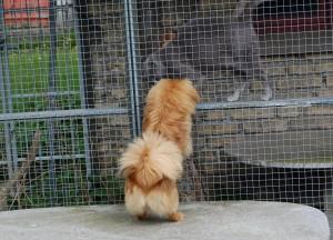 Kosmos vil gerne kigge på hundene