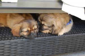 Dina og Arthur blev trætte