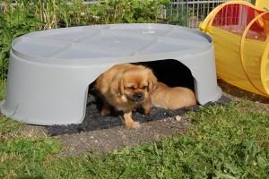 De voksne hunde bruger også hulen