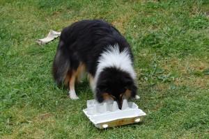 Sif fandt ud af at åbne æggebakken og fik guffet indeni !