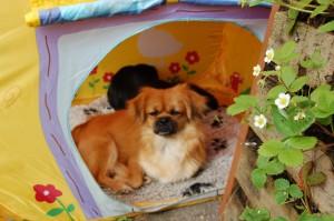 Ruby og bagerst Bonnie har gemt sig i det gamle legetelt