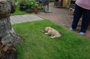 Einar har snuppet et stykke bark fra træstubben