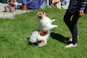 Jeg kan danse !