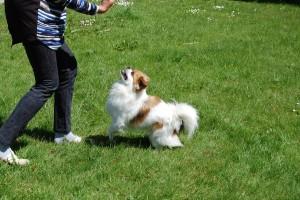 Zaki er en ivrig hund