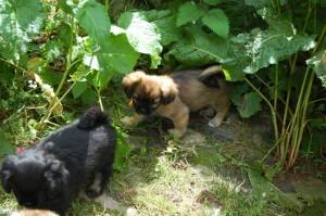 Fanny og Emma i vildnisset