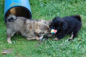 Frida og Fanny kæmper om den