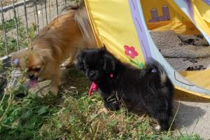 Dina og Fanny leger