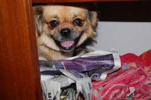 Jeg ryddede nederste hylde i skabet til Luna, så kravlede hun ikke ind under sofaen