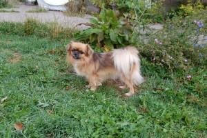 Lille søde Tosca