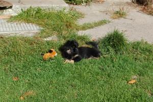Hulda ligger og passer på sin bamse.