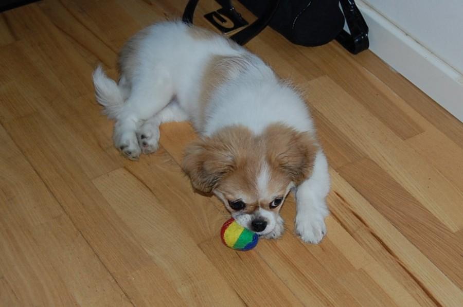 Inez fandt en lille blød bold at lege med