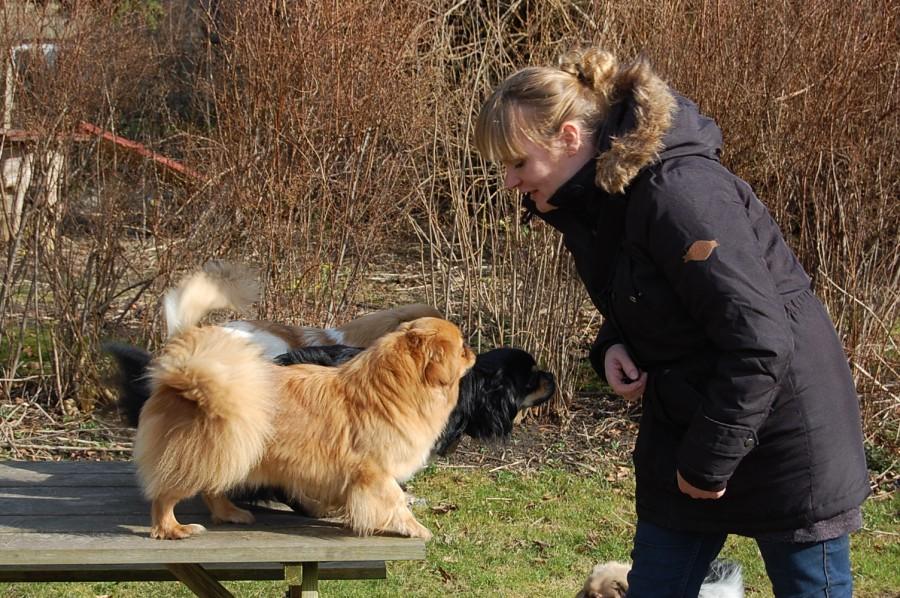 Janni med nogle af hundene