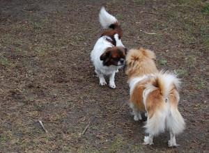 Aiko og Olympia hilser