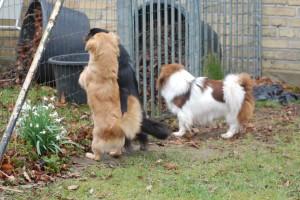 Inka, Bonnie og Ayla ønsker gæsterne velkommen