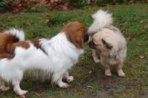 Ayla og Berta