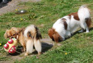 01.05.2016 Ayla og Flora leger 017