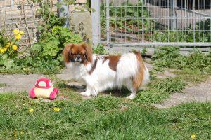 01.05.2016 Ayla og Flora leger 099