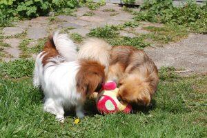 01.05.2016 Ayla og Flora leger 100