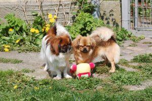 01.05.2016 Ayla og Flora leger 107
