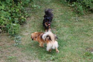 Flora og Bonnie