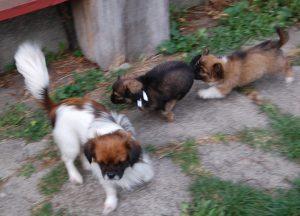 Ayla og to af hendes sønner