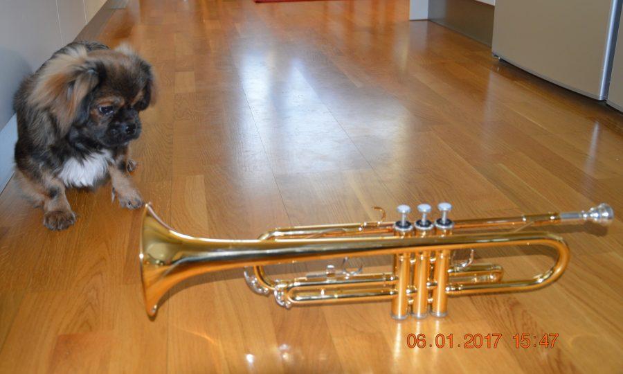 Samson og trompeten